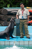 Sea lion and trainer Royalty Free Stock Photos