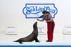Sea lion with trainer show Royalty Free Stock Photos