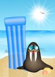 Sea lion on vacation Stock Images