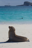 Sea lion view. A sea lion on a beach in the galapagos islands Stock Photo