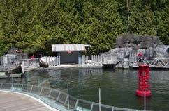 Vancouver Aquarium Sea Lion show stock images