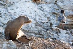 A sea lion watching bird in morning sun Royalty Free Stock Photo