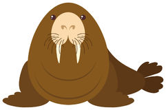 Sea lion on white background Royalty Free Stock Images
