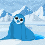 Sea lion on a winter background Royalty Free Stock Photography