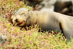 A sea lion Stock Photos