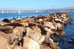 Sea Lions. On the beach stock photos