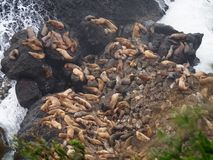 Sea Lions, aerial view Stock Photo
