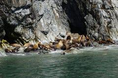 Sea Lions in Alaska stock photos
