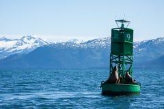 Sea Lions in Alaska Stock Photo
