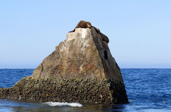 Sea Lions. By the Arch of Cabo San Lucas in Baja California Sur, Mexico on May 2017 Royalty Free Stock Image