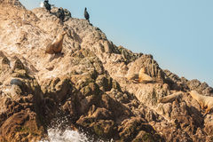 Sea Lions and Birds on Island Stock Photo