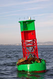 Sea Lions on a Buoy Stock Photo