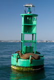 Sea lions on buoy. Sea lions on a buoy in San Diego Bay royalty free stock photography