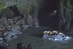 Sea Lions Cave. The biggest in USA stock photos