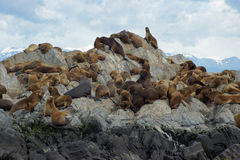 Sea lions colony, Beagle Channel, Argentina Stock Photo