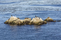 Sea Lions, cormorants and other birds relax at a rock in the oce Royalty Free Stock Photography