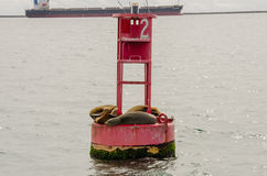 Sea Lions Cuddle on a Buoy in the Long Beach Harbor Royalty Free Stock Photography