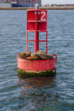 Sea Lions Cuddle on a Red Buoy in Long Beach Habor Vertical Royalty Free Stock Images