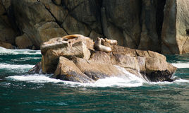 Sea Lions Dry Out Rocky Outcroppings Alaska Valdez Arm Royalty Free Stock Image
