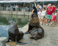 Sea lions entertain tourists by posing for photos Royalty Free Stock Photography