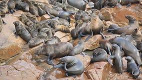 Sea Lions Royalty Free Stock Photos