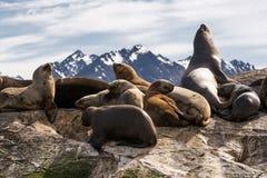 Sea lions on isla in  beagle channel near Ushuaia Royalty Free Stock Photos