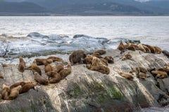 Sea Lions island - Beagle Channel, Ushuaia, Argentina Royalty Free Stock Image