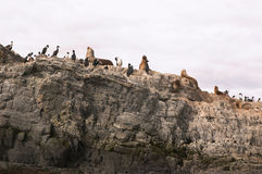 Sea lions island. Sea lions and cormorans island Royalty Free Stock Image
