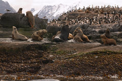 Sea lions island Stock Photo