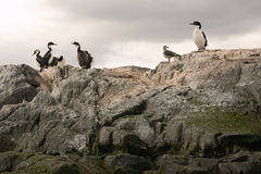 Sea lions island. Sea lions and cormorans island Stock Photos