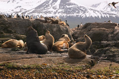 Sea lions island. Sea lions and cormorans island Royalty Free Stock Photo