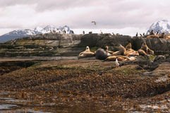 Sea lions island. Sea lions and cormorans island Stock Photo