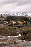 Sea lions island. Sea lions and cormorans island Stock Images