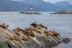 Sea Lions island and lighthouse - Beagle Channel, Ushuaia, Argentina Royalty Free Stock Image