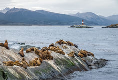 Sea Lions island and lighthouse - Beagle Channel, Ushuaia, Argentina Stock Photography