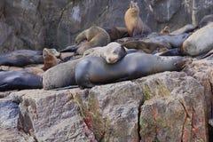 Sea Lions at Land's End Cabo San Lucas stock photos