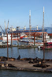 Sea-lions On A Pier In A Marina Astoria, OR. Royalty Free Stock Photography