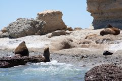 Beach and Sea lions royalty free stock image