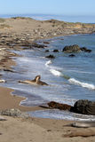 Sea lions at the Pacific Coast, California, USA Royalty Free Stock Images