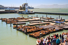 Sea lions, Pier 39, Fishermans Wharf Stock Photos