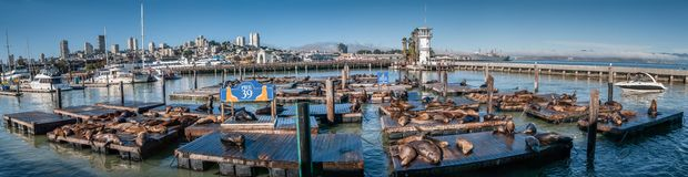 Sea lions at Pier 39 Panorama stock photo