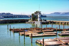 Sea lions at Pier 39 a popular tourist attraction. It is located at the edge of Fisherman's Wharf district and is close to North Beach and Embarcadero royalty free stock images