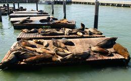 Sea lions at Pier 39 Royalty Free Stock Photos