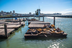 Sea Lions at Pier 39 Stock Photos