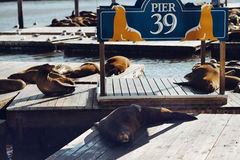 Sea lions on Pier 39 in San Francisco, California, USA. SAN FRANCISCO, CALIFORNIA, USA - SEPTEMBER 15, 2013: Sea lions on Pier 39 in San Francisco, California Royalty Free Stock Images