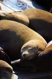 Sea lions at Pier 39, San Francisco, USA Stock Photo