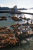 Sea lions at Pier 39, San Francisco, USA Royalty Free Stock Photography