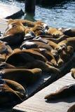 Sea lions at Pier 39, San Francisco, USA Stock Photos
