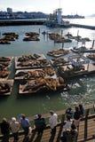 Sea lions at Pier 39, San Francisco, USA Royalty Free Stock Photo