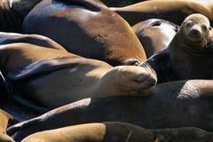 Sea lions at Pier 39, San Francisco, USA Stock Images